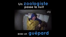 Ce zoologiste passe une nuit paisible en compagnie d'un guépard..