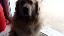 Le chien qui me fait pleurer ( je ne rigole pas cette video fait pleurer de joie)