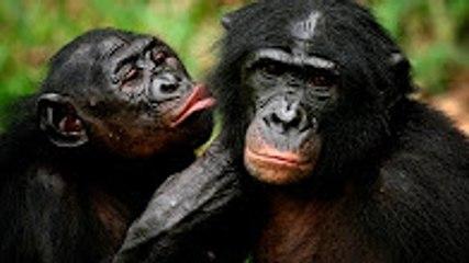 [HD] Hayvanlardaki İlginç Çiftleşmeler ◄◄ Jacob Videoları ►►