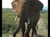 Sourate l'éléphant avec la traduction française