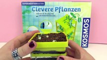 FAIL - Dried Peas | Restarting experiment 2 | Clever plants from Kosmos Update 3