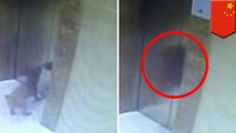 Dog strangled to death with leash trapped between elevator doors