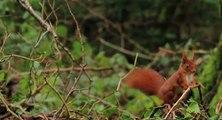 L'Agence française pour la biodiversité est créée en application de la loi de reconquête de la biodiversité