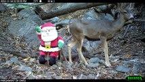 Papa Noël rencontre des animaux sauvages :)