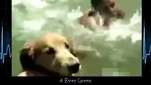 animals dogs dangerous _13