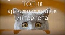 ТОП-10 самых красивых котов интернета