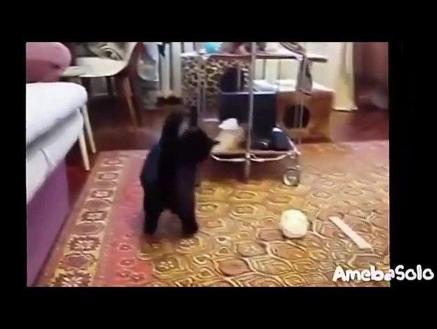 Clip hài hước nhất thế giới - cười bể bụng   Godialy.com