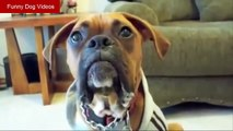 Funny Talking Dog Videos - Funny Dog Videos - Dog Funny Video