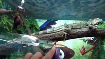 New Finger Family song with Real reptile Learn reptiles names, snake, crocodile, spider, iguana, tur