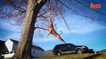 Ky është qeni më i rrezikshëm në botë, ja çfarë është në gjendje të bëjë!