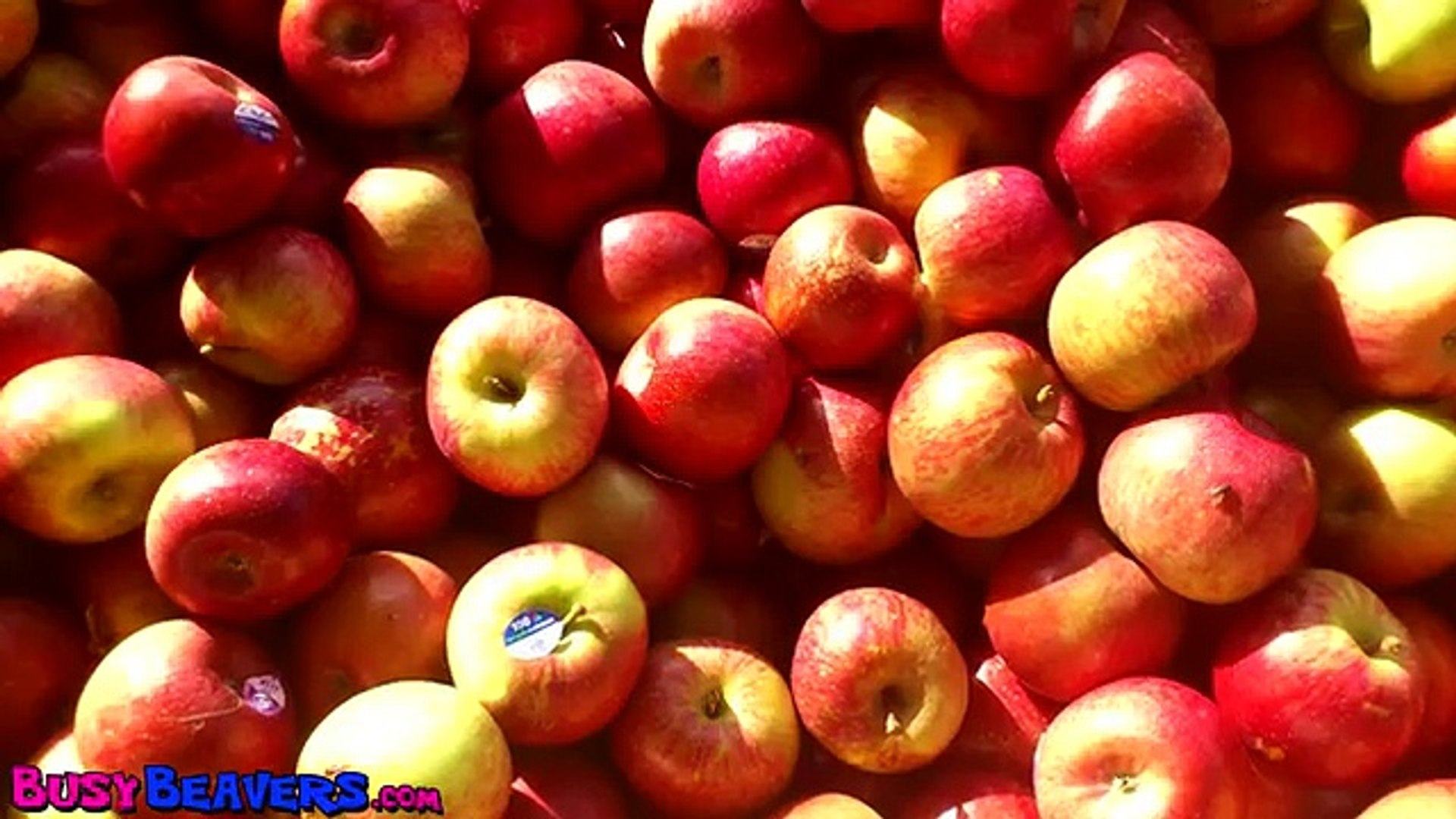 Apples are Yummy CLIP - Kindergarden Songs, Preschool Education, Kid Songs