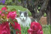 Funny Animals - Funny Cats - Funny Dogs & Animals - Animals Funny