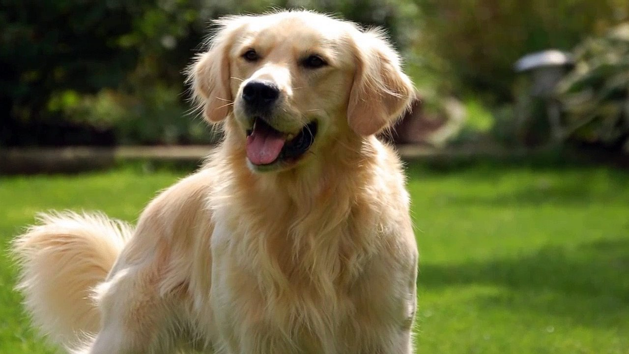 3 Horrifying Stories Where Dogs Saved The Day Mr Nightmare Dailymotion Video I just want to be the one you love. dailymotion