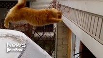 Un chat saute depuis une voiture enneigée et glisse