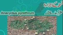 Mardana taqat tips in urdu   Nafs ki sakhti   Nafs ki sakhti ke liye   Nafs   Mardana kamzori Ling