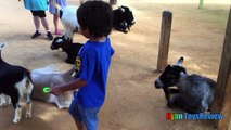 ANIMALS POOPING AT THE ZOO Kid at the ZOO Funny Family Fun Trip to Petting Farm Animals for Children-02