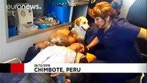Deux chiens refusent de quitter leur propriétaire blessé et sautent dans l'ambulance alors qu'il est transporté à l'hôpi