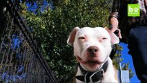 Smiling Dog Is New York's Happiest Hound: CUTE AS FLUFF