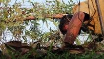 La tribu de cazadores de serpientes que salva vidas en India