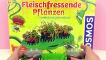 VENUS FLYTRAP grows | Sundew forms dewdrops | Carnivorous Plants Update 4