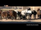 Orda Bir Köy Var Uzakta (Kırgızistan / 3. Bölüm) - TRT Avaz