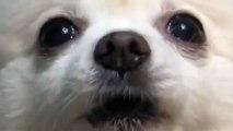 Video dog, dog
