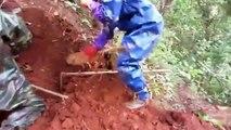 Ces ouvriers tombent sur le plus gros nid de frelons asiatiques du monde