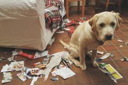 A Post Man Pranks with Dog dog food dog tricks funny dog videos dog training