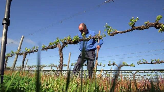 Climate change battle heats up for Australian winemakers