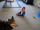 Dog Makes Baby Laughing (Best Funny Videos - Fun)