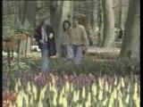 Pays Bas : Le pays de la tulipe