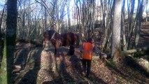 Débardage à cheval sur la Badina, affluent du Dropt