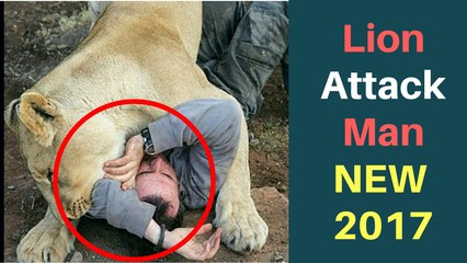 SHOCKED VIDEO Lion Attack On Man - NEW Latest 2017 Must Watch