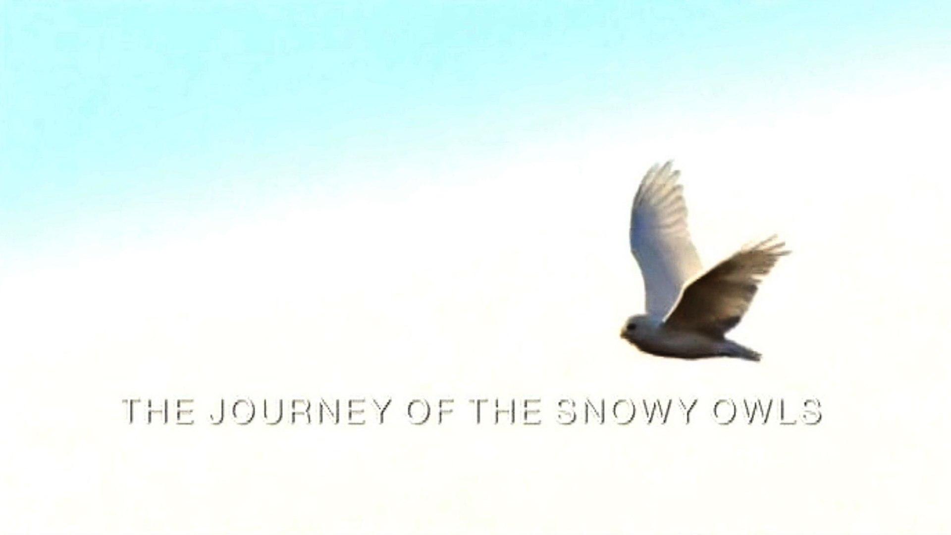 Зимняя сказка. Путешествие полярных сов / A winter's Tale: The Journey of the Snowy Owls, (2015)