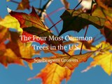 Southeastern Growers - 4 Most Common Trees in the U.S.