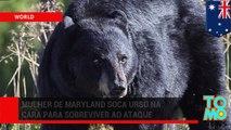 Mãe urso morta depois de atacar mulher em Maryland.
