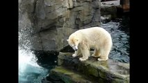 Polar Bears for Kids, Polar Bear Cubs at the Zoo, Arctic Bear Swimming