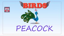 birds-birds names-birds names in english-learn words-how to