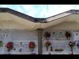 Aversa (CE) - Cimitero, scarsa manutenzione: protestano i titolari dei loculi (04.01.17)