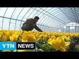꽃샘추위 속에서도 성큼 다가온 봄 / YTN