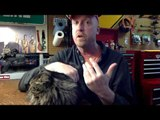 Feline Critic Delivers Compleley Serious Review of Maine Coon