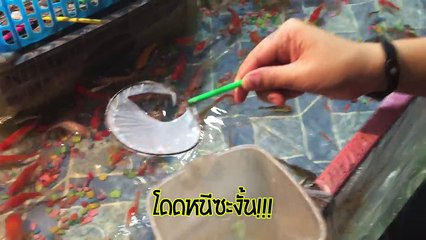 งานวัดฮาเฮ แข่งช้อนปลางานวัดกับเทคนิคขั้นเทพ