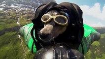 Dean Potter Worlds First Wingsuit BASE Jumping Dog