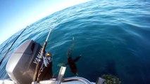 Crazy Guy Jumps Onto a Shark