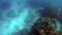 Un requin-bouledogue attaque un chasseur sous-marin