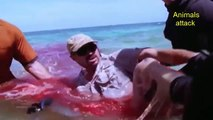 Teenage Girl Dies After Horrific Shark Attack - Shark Attack Footage Caught On Tape 2016    (HD)