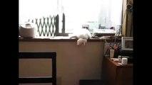 Le chat dort la tête en bas et tombe