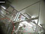 Une caméra cachée choc révèle les expériences menées sur des singes dans un laboratoire parisien