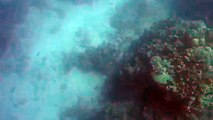 Un requin attaque un chasseur sous-marin