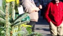 Le ZAP - La collecte des sapins dans l'agglomération grenobloise